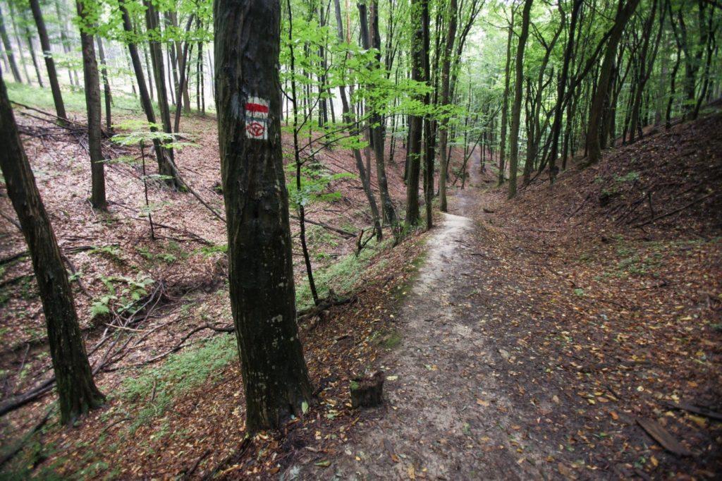 Szent Erzsébet út Zemplén turistajelzés