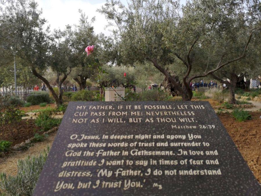 Getszemáni-kert, imádság